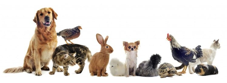 Le guide des distributeurs nourriture pour animaux